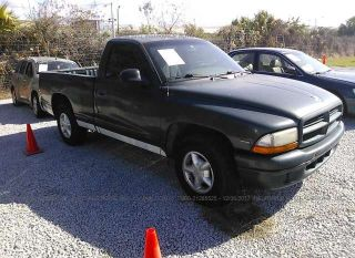 Used 1999 Dodge Dakota in Tampa, Florida